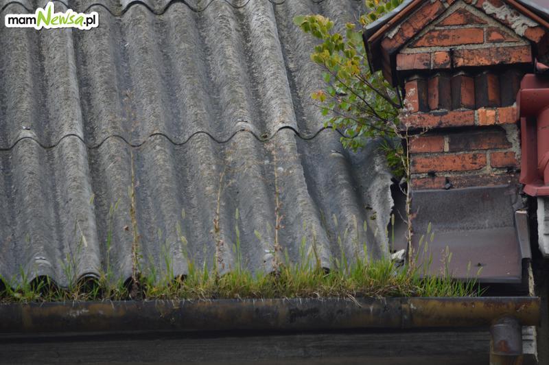 Krzaki na dachu, trawa w rynnie, czyli (niektóre) andrychowskie kamienice