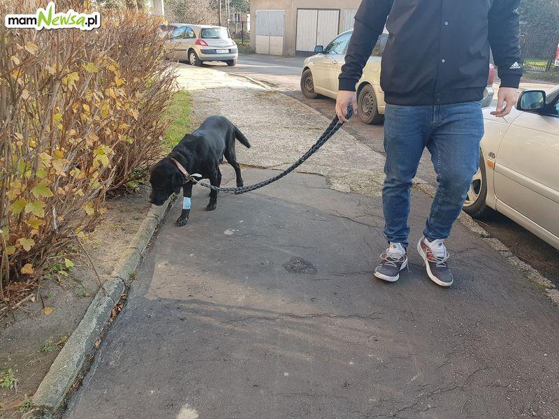 Nawet 5000 zł kary za spacer z psem bez smyczy!