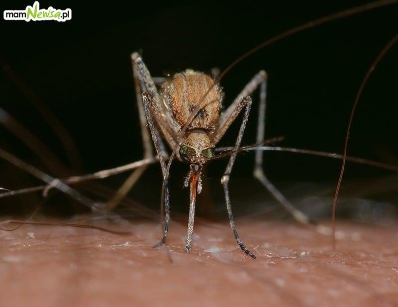 Komary coraz bardziej uciążliwe. Burmistrz zapowiedział, że nie będzie akcji odkomarzania