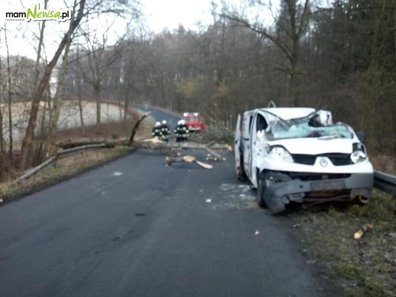 Drzewo runęło na busa. Jedna osoba poszkodowana