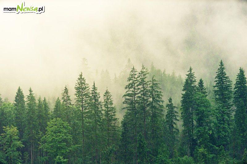 Zakaz wejścia do lasu? Sprawdzamy, jak to jest w Nadleśnictwie Andrychów