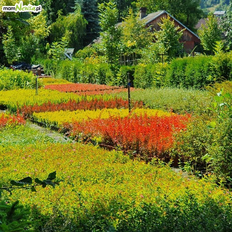 Sierpień i wrzesień to doskonały czas dla ogrodu. Eryk Stus radzi [VIDEO]