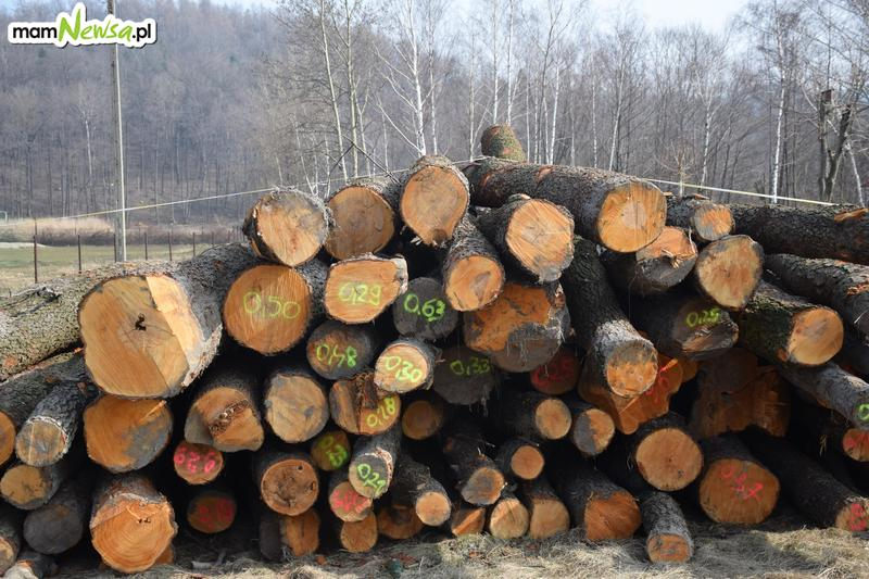 Po wycince na Pańskiej Górze. Kto kupi drewno? [FOTO]
