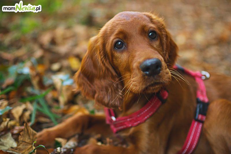 Karma dla psa - jak wybrać?