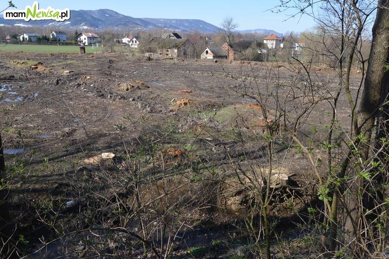 Staw Anteckiego wyczyszczony z drzew i zdaniem niektórych zniszczony