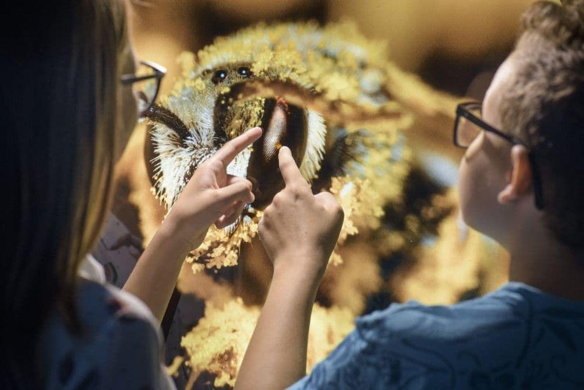Interaktywne Centrum Pszczelarstwa APILANDIA zaprasza na Dzień Dziecka