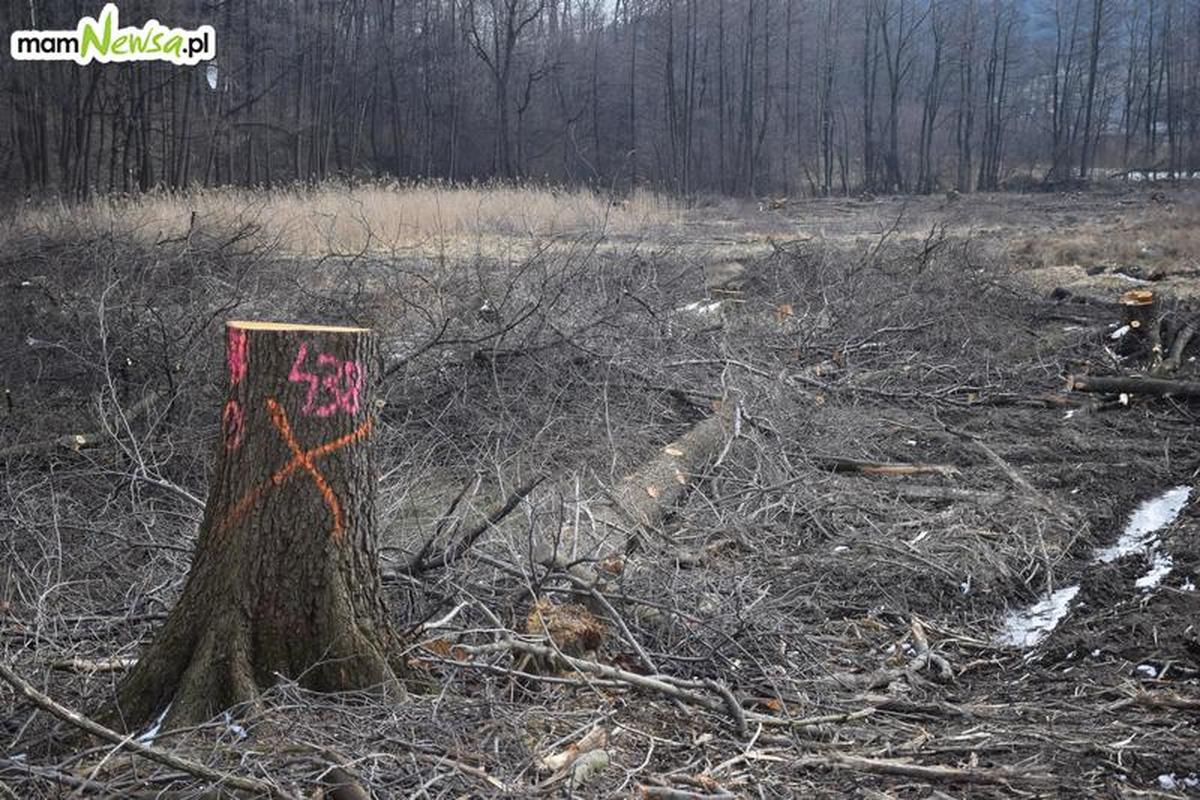 Ponad 200 drzew do wycięcia na Pańskiej Górze