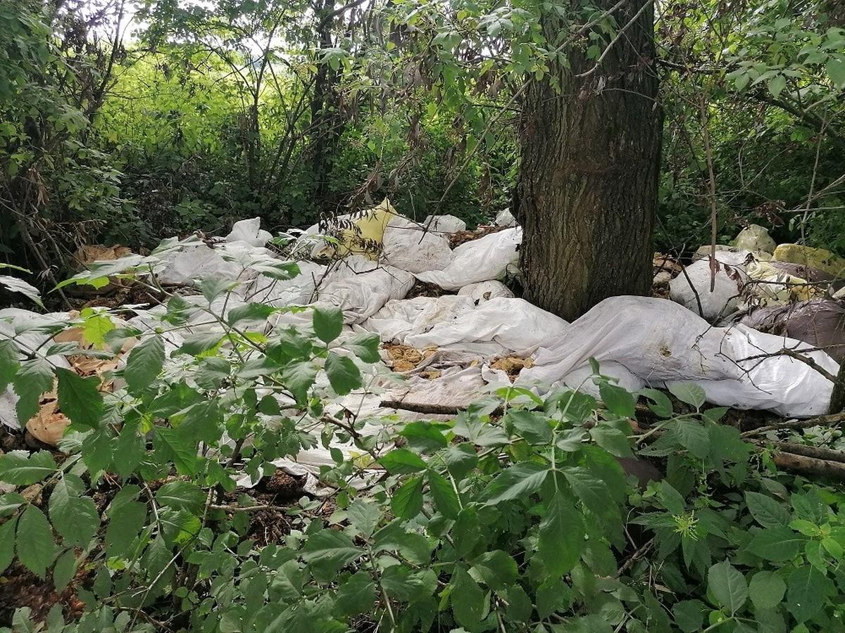 Przedsiębiorca wyrzucił w lesie 50 worków odpadów!
