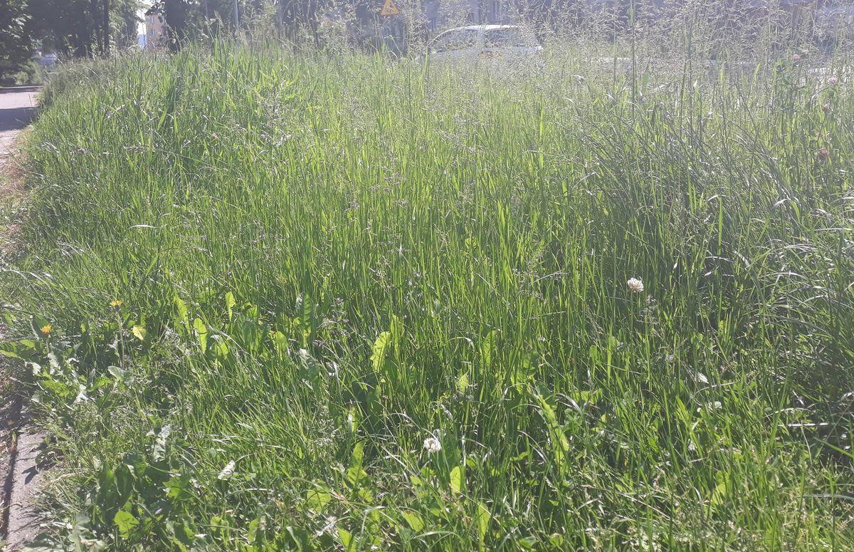 Wkrótce zaczną kosić trawy w gminie Andrychów