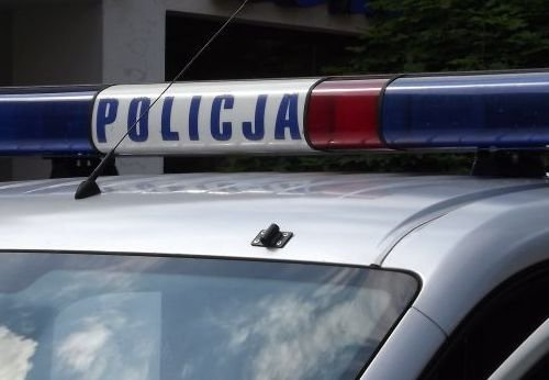 Policja na tropie psa, który w nocy zmasakrował hodowlę królików