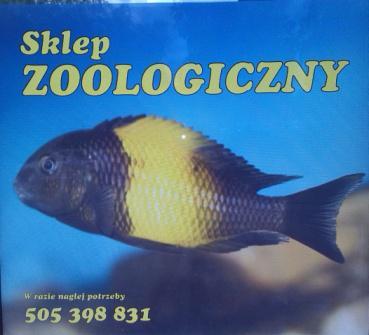 Sklep zoologiczny AQUA-ZOO zaprasza wszystkich pasjonatów zoologii!