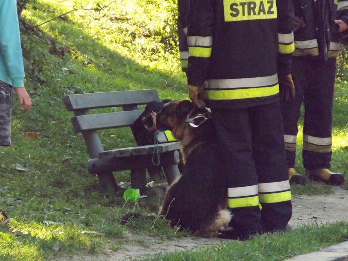 Pies pogryzł kobietę w Andrychowie