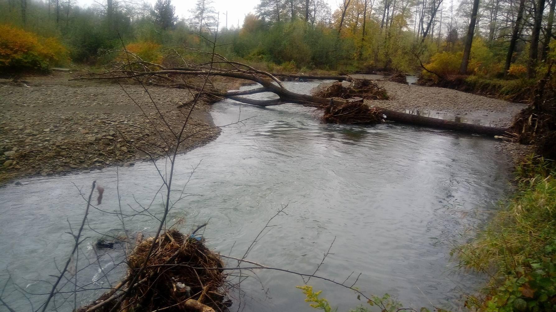 Drzewa w rzece nieposprzątane, a jak było podczas powodzi w 2005 roku? [FOTO]