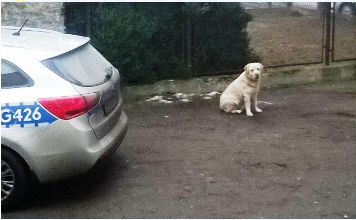 Dzięki policjantom pies trafił do właściciela