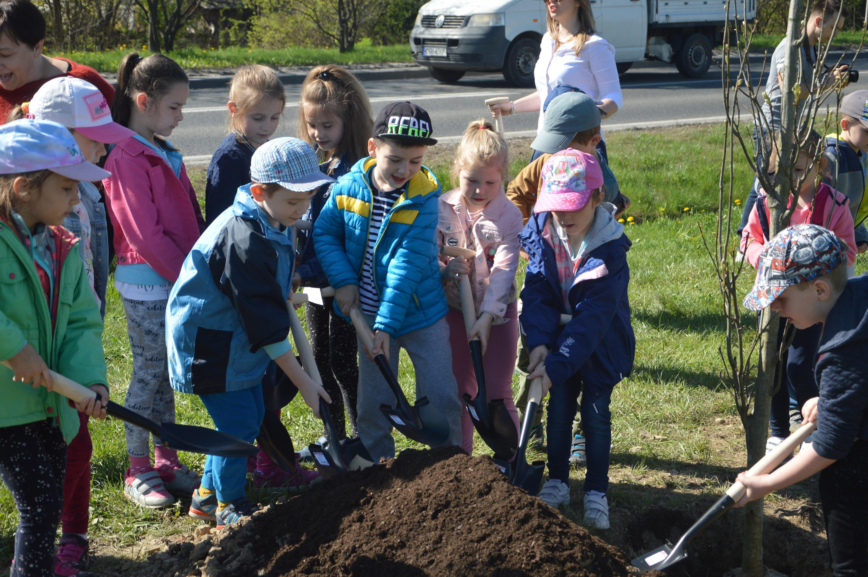 Zasadzili 100 drzew wzdłuż obwodnicy. Uczcili dwa święta