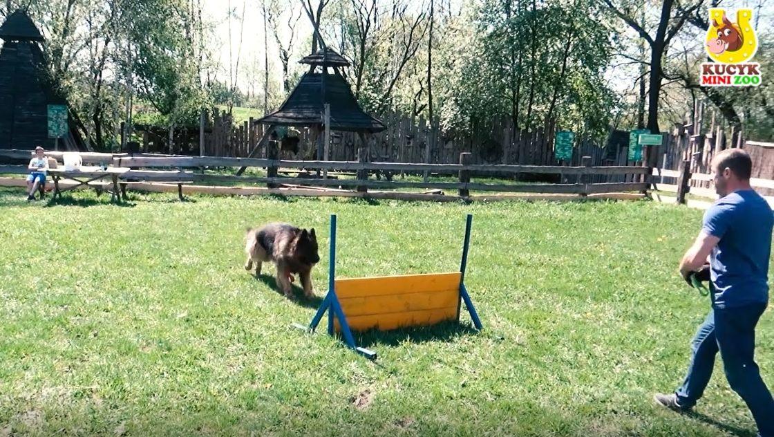 Psi park w Mini Zoo w Inwałdzie