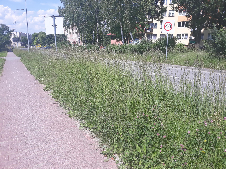 Kiedy w końcu skoszą tę trawę? To jest wylęgarnia kleszczy!