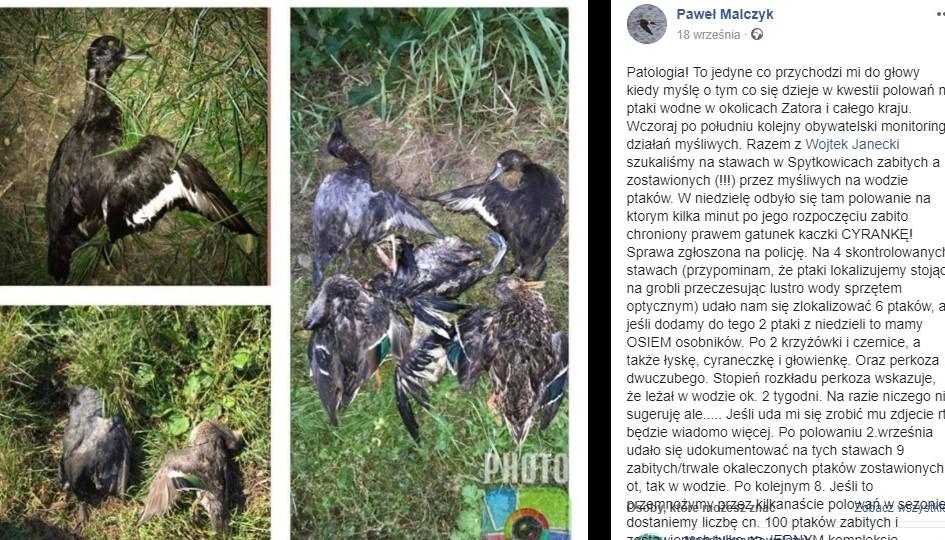 Czy w Zatorze giną zagrożone gatunki ptaków?