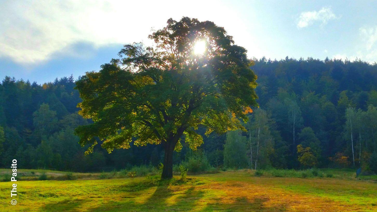 Zdjęcie Dnia. Barwy jesieni