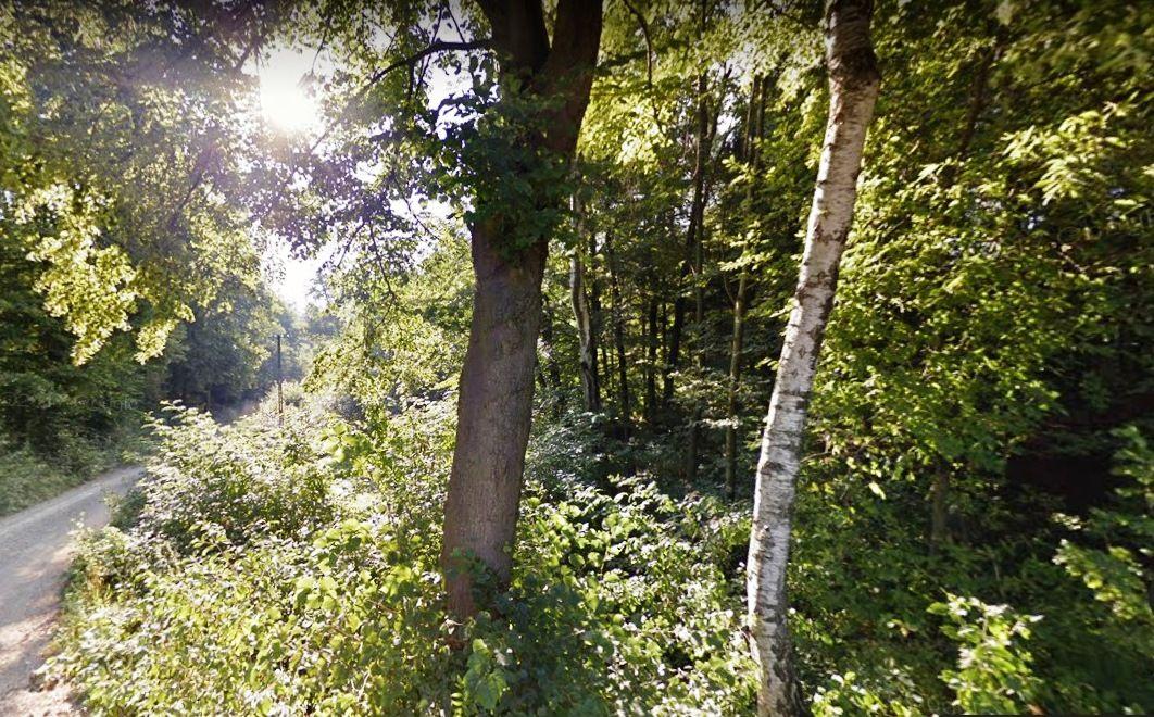 Zaginiona  60–letnia mieszkanka została odnaleziona w lesie