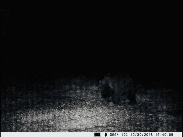 Uwaga na niedźwiedzia!