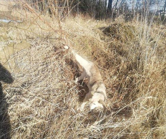 Co za bestialstwo! Pies przywiązany tylną nogą do drzewa