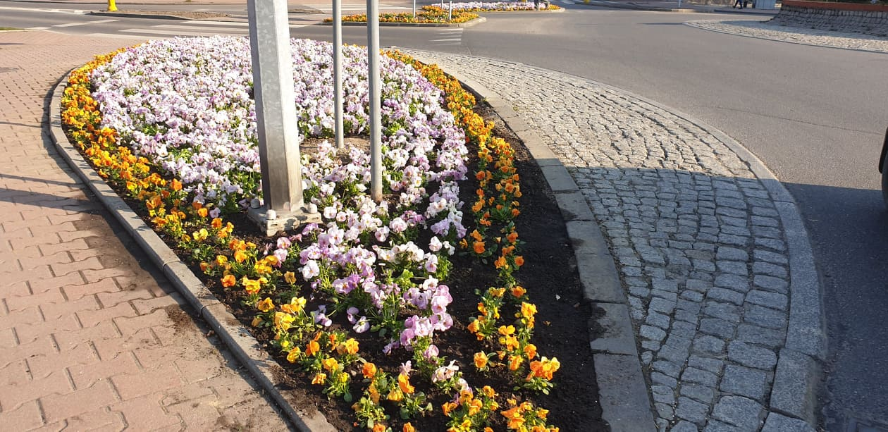 Ile w końcu kosztują te kwiatki? Mamy oficjalne dane