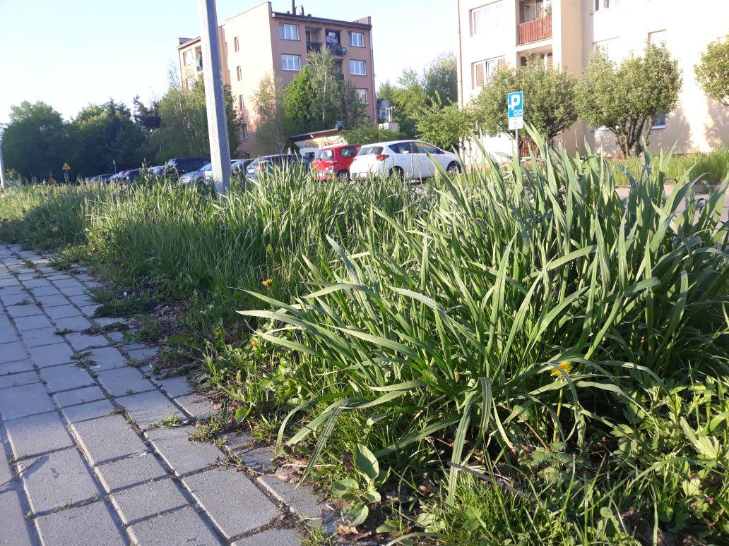 Kiedy w końcu wykoszą trawę przy drogach?