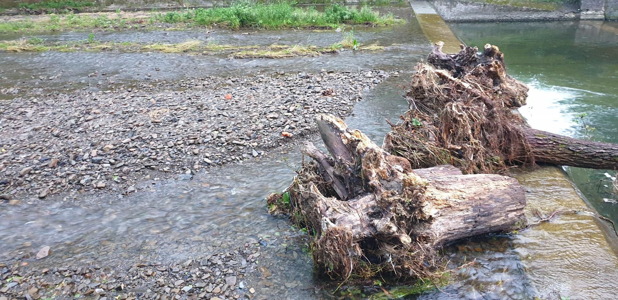 Wieprzówka po ulewach. Konary drzew wyrwane z korzeniami