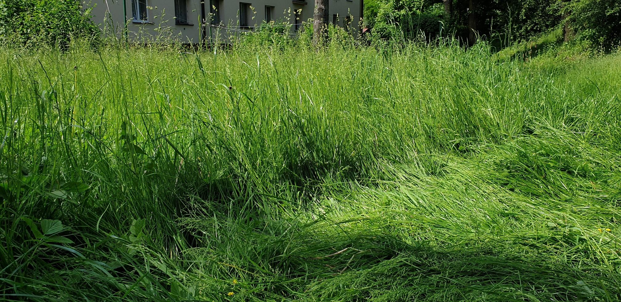 Po zabawie w wysokiej trawie dziecko miało aż 9 kleszczy!