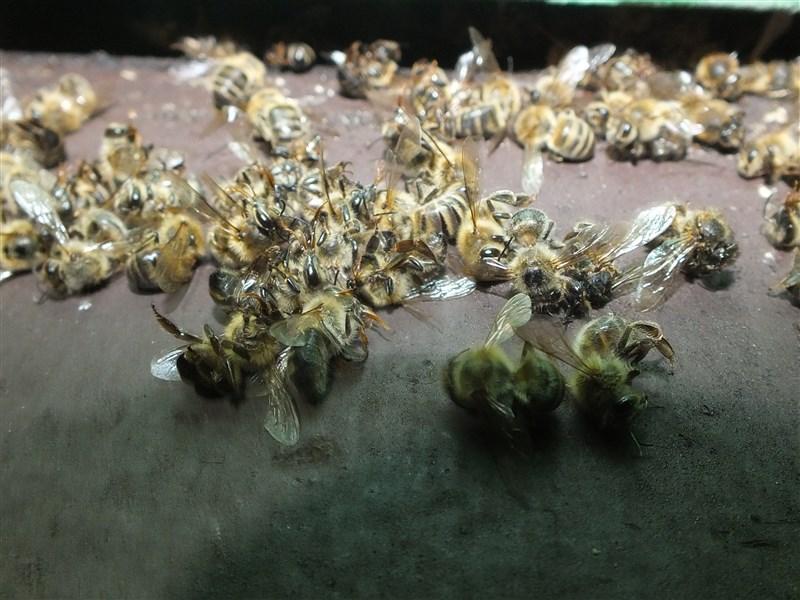 Pogrom w pasiece. Padło 3,5 mln pszczół