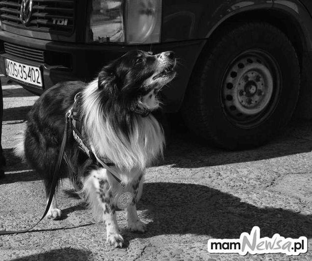 Strażacy pożegnali zasłużonego psa-ratownika