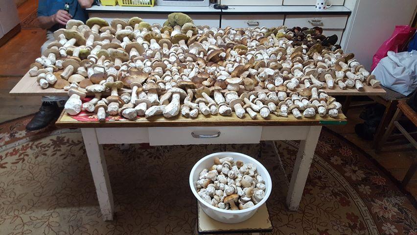 Nasz Czytelnik w ciągu kilku godzin zebrał 25 kg grzybów [FOTO]