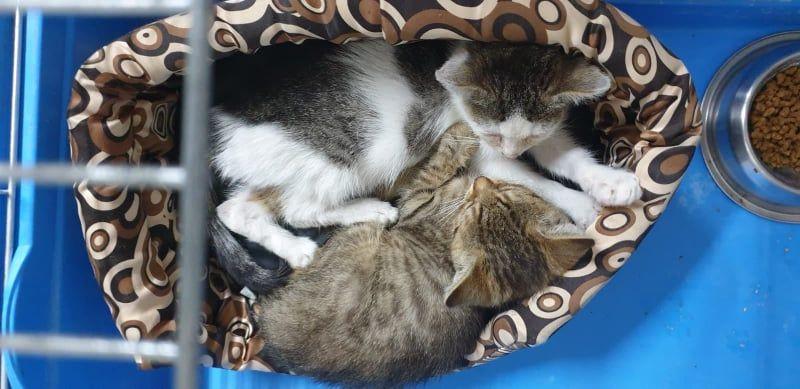 Dwa kotki poszukują nowego właściciela