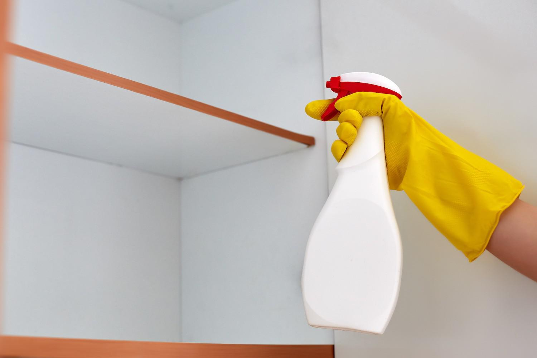 Insekty w domu. Jak pozbyć się robaków z mieszkania?