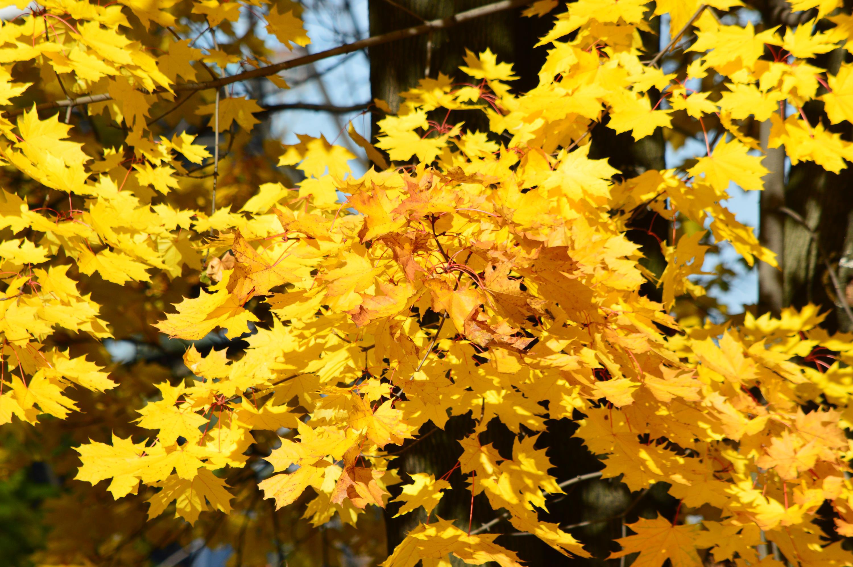 Polska złota jesień w regionie na zdjęciach [FOTO]