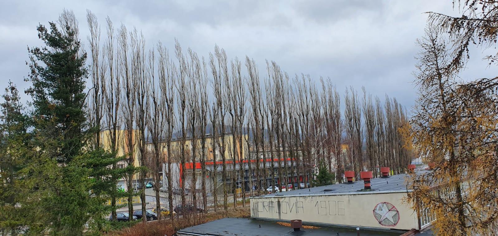 Cała aleja drzew do wycięcia [FOTO] [AKTUALIZACJA]