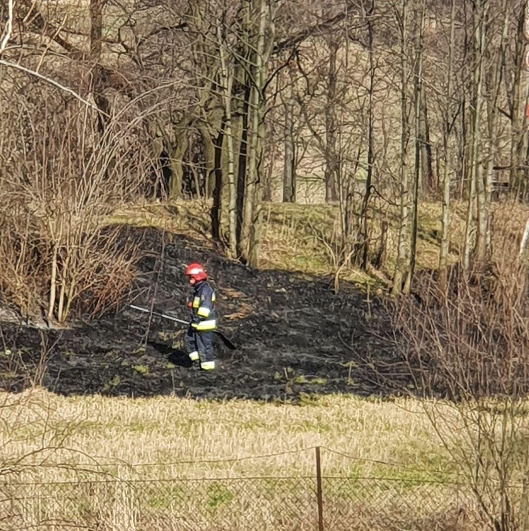 Znowu płonęły trawy na osiedlu