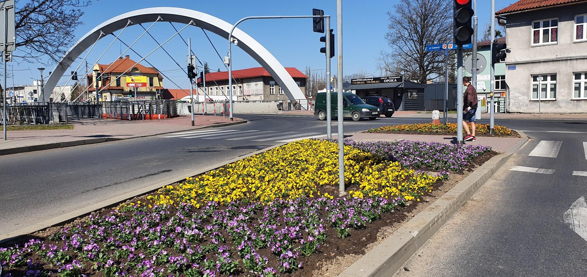 Burmistrz kupuje kwiaty na wiosnę. Ukwiecenie zamiast maseczek?