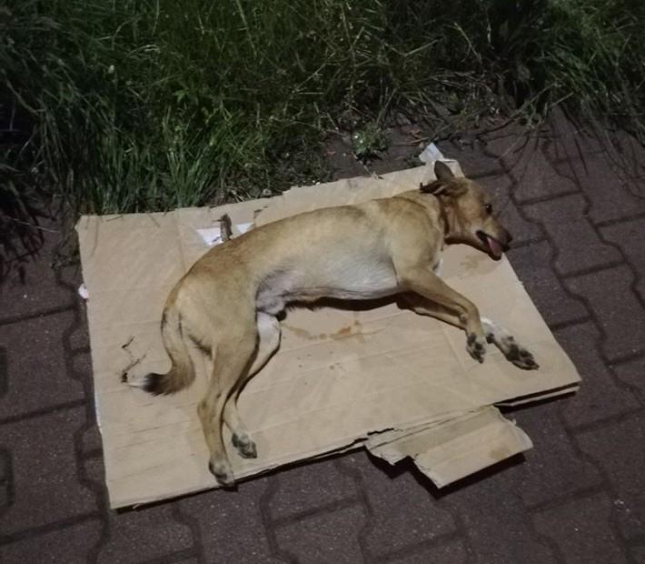 Kierowcy dwóch samochodów brutalnie potrącili psa i uciekli