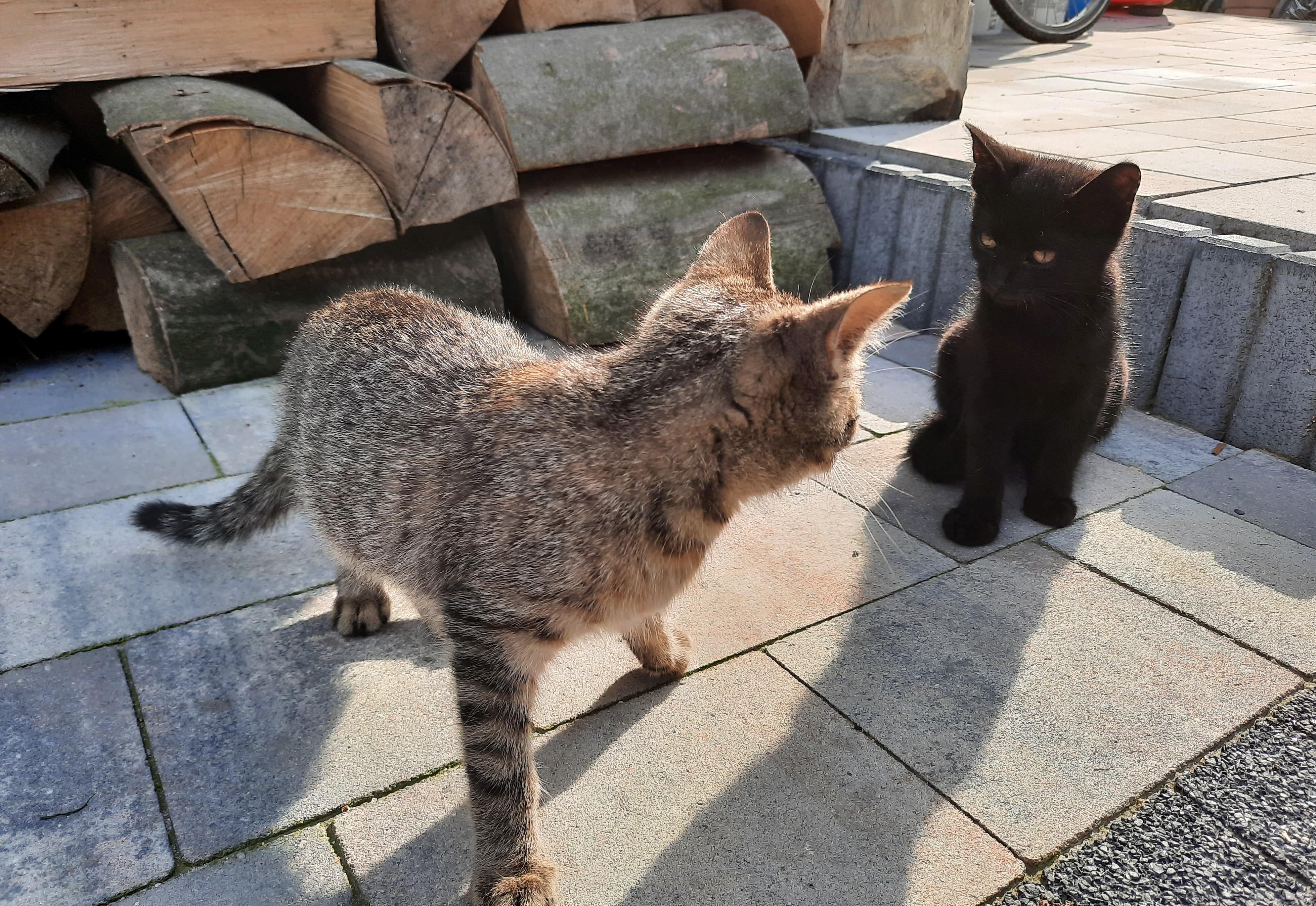 Poszukiwany dom dla porzuconych, malutkich kotków