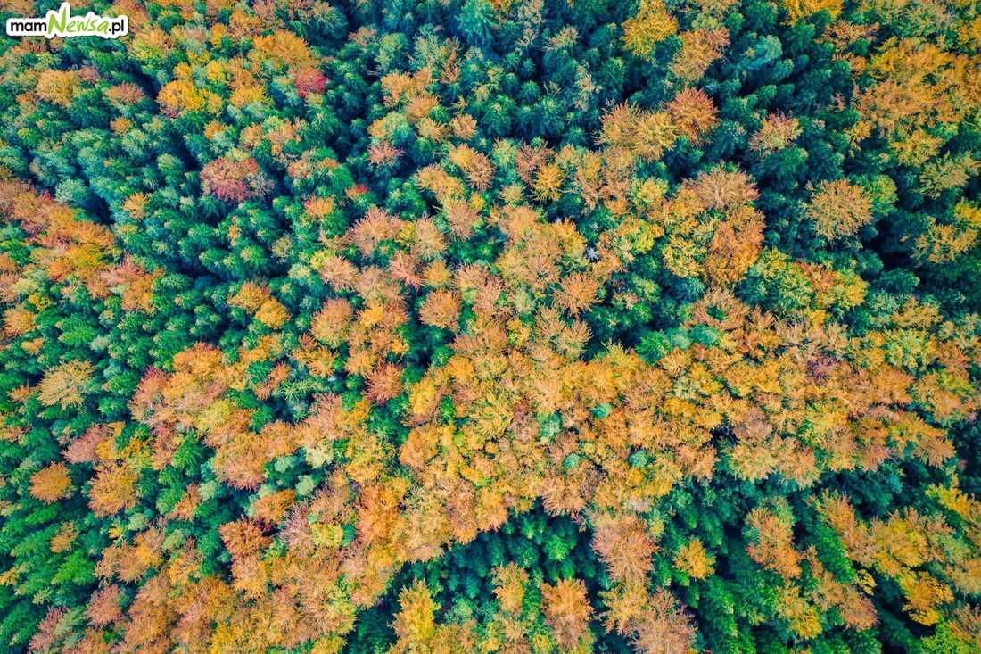 Jesień pokazała swoje kolory [FOTO]