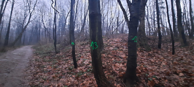 Wycinka drzew na Pańskiej Górze pod znakiem zapytania