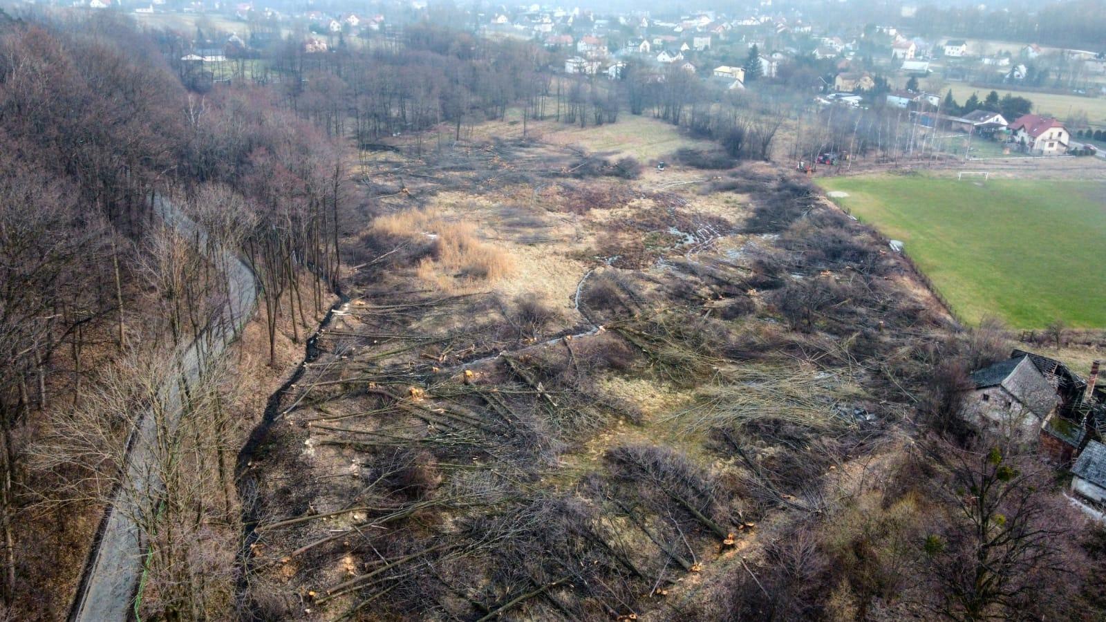 Piły poszły w ruch w Andrychowie. Wycięto mnóstwo drzew [VIDEO]