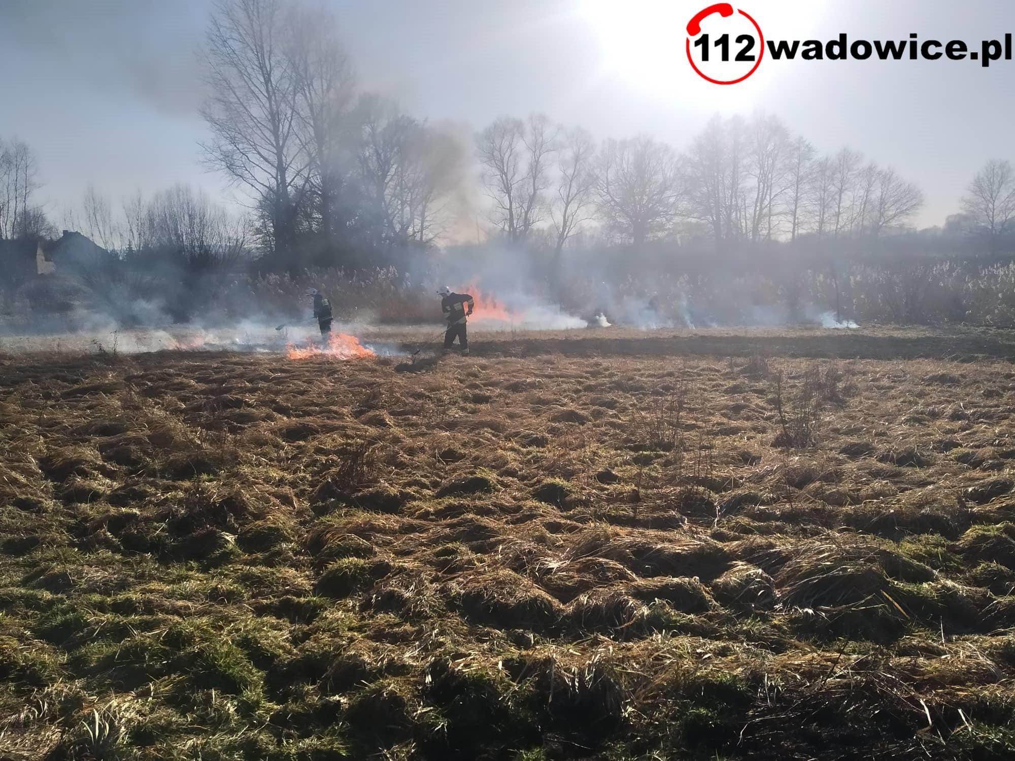 Wraz z wiosną powracają pożary traw...