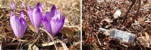 Idzie wiosna.... To widać [FOTO]